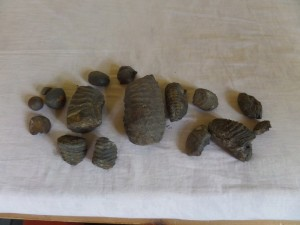 "This was the day's ""haul"" from the Shaligram bed."