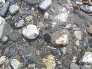 A Shaligram Appears in the River!